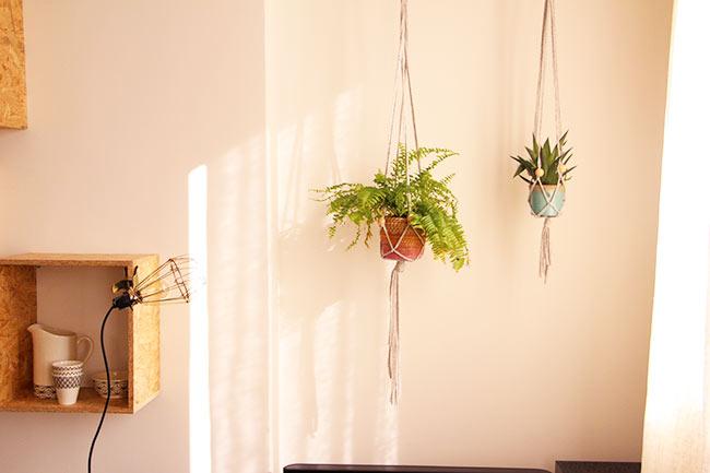 plantes4