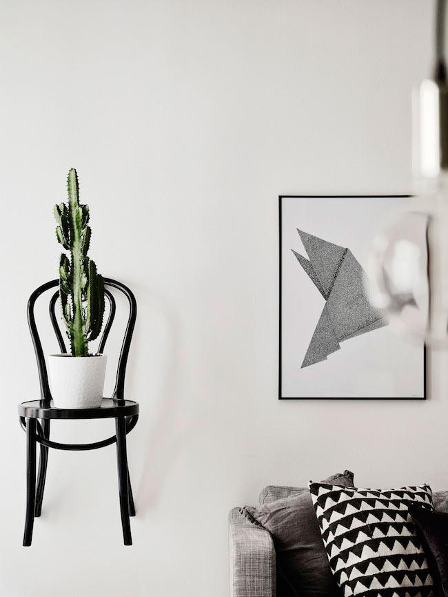 chaise et cactus
